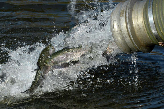 The Texas Parks and Wildlife Department's annual winter trout stocking program, which will put almost 300,000 fish into 141 public waters, began this week.