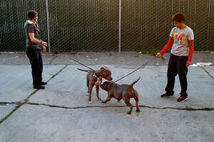 S.F. Animal Care and Control dogged by heavy calls, low staffing - Photo