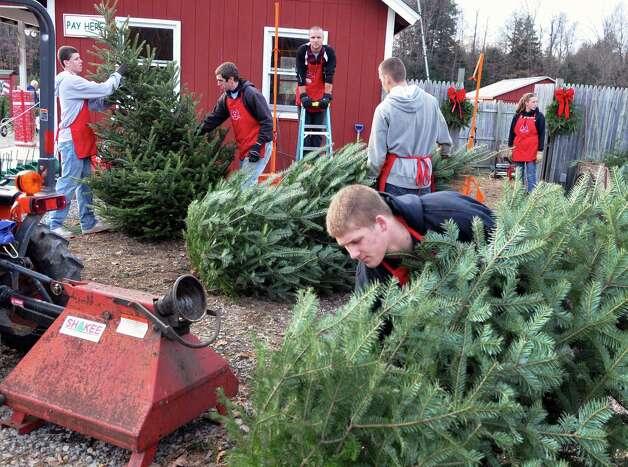 Staff at the Ellms Christmas Tree farm in Charlton prepare customers' trees Saurday Nov. 26, 2011.   (John Carl D'Annibale / Times Union archive) Photo: John Carl D'Annibale / 00015520A
