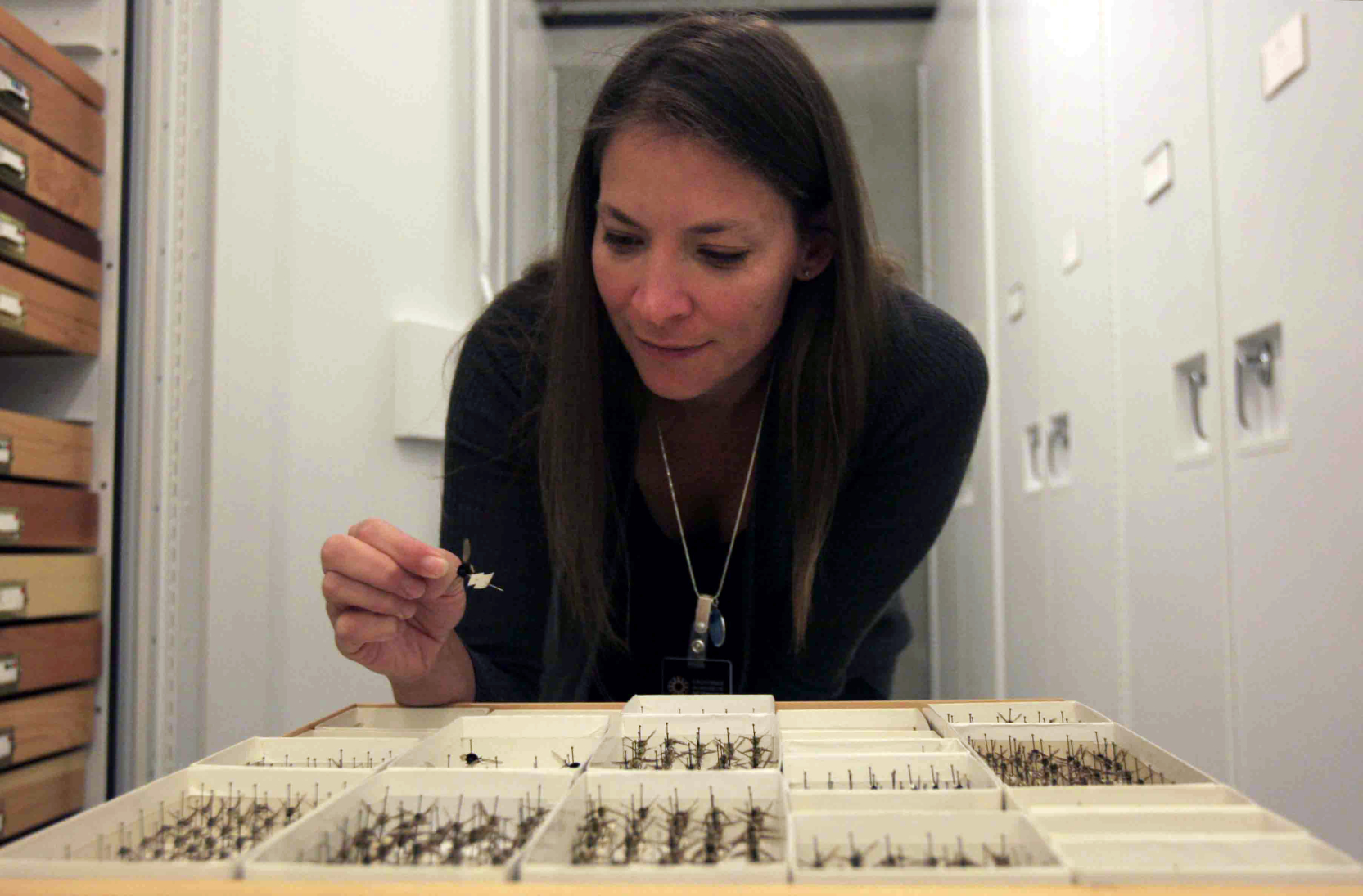 Fly curator joins the California Academy of Sciences