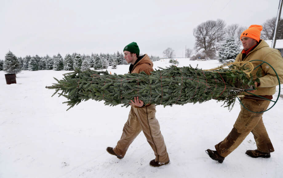 Avery Langholz, left, and Chris Allen carry a Christmas tree for a customer in Cumming, Iowa. Photo: Charlie Neibergall / Associated Press / AP