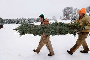 Christmas tree inflation pleases growers - Photo