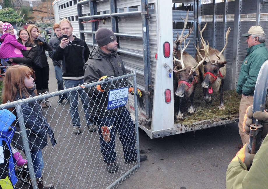 Reindeer are unloaded during the start of the Greenwich Reindeer Festival and Santa's Workshop event at McArdle's Florist and Garden Center in Greenwich, Conn., Friday, Nov. 28, 2014. The reindeer and Santa will be at McArdle's until Dec. 24. For further details: www.GreenwichReindeerFestival.com  Photo: Bob Luckey / Greenwich Time