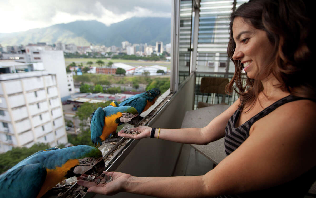 Vanessa Silva, 38, feeds macaws that fly to her Caracas apartment window every day looking for food. Some will eat out of her hand.