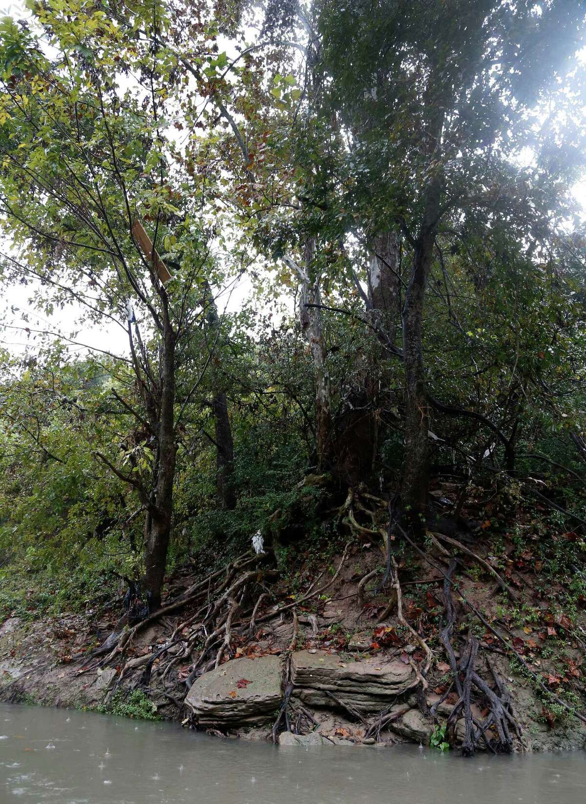 Trees and a rock outcropping -- rare in Houston -- secure the shoreline on Buffalo Bayou between Memorial Park and River Oaks Golf Course.