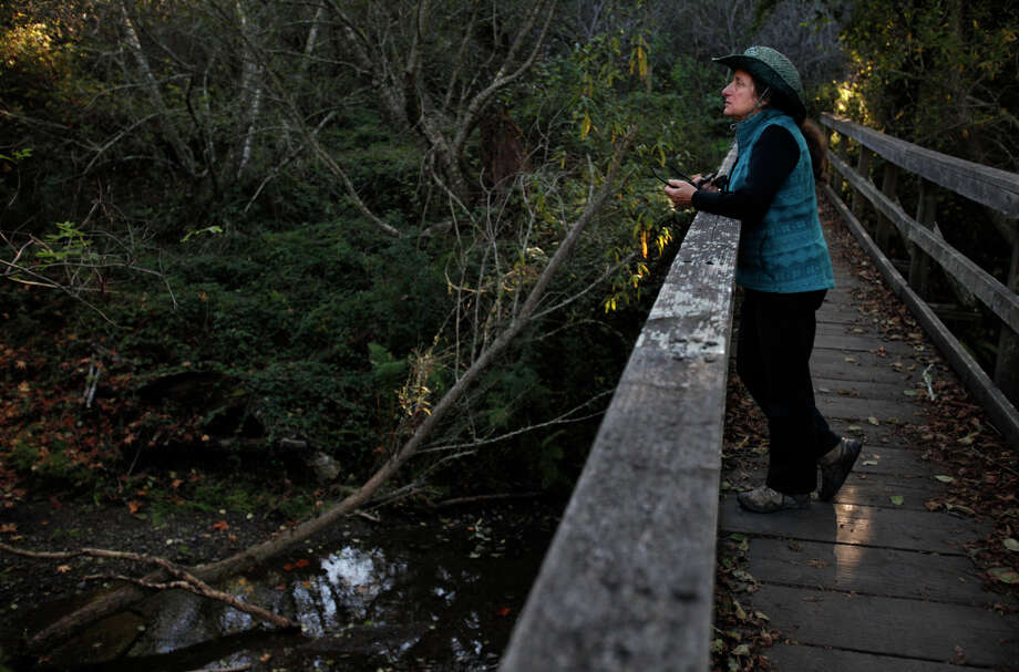 Laura Chariton, director of the Watershed Alliance of Marin, visits Redwood Creek, where the coho didn't spawn this year. Photo: Leah Millis / The Chronicle / ONLINE_YES