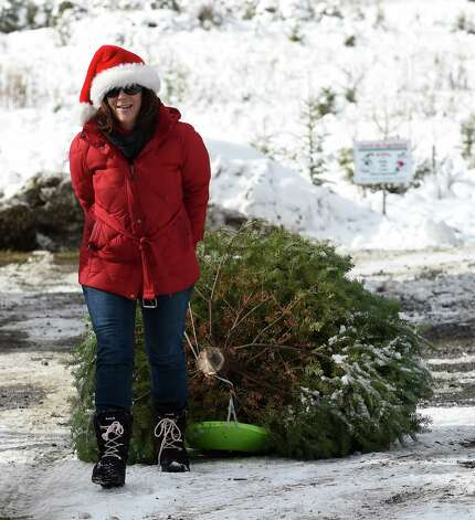 Dressed in her finest seasonal outfit, Michelle Arndt of Ballston Spa drags a freshly cut Christmas tree from the field of the Goode Tree Farm Friday morning Nov. 28, 2014 in Ballston Spa, N.Y.  (Skip Dickstein/Times Union) Photo: SKIP DICKSTEIN / 00029956A