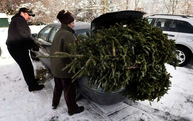 Using a great deal of fines, Ken Barns and Karen Connors put a sizable freshly cut Christmas tree from the field of the Goode Tree Farm in a compact car Friday morning Nov. 28, 2014 in Ballston Spa, N.Y. (Skip Dickstein/Times Union) Photo: SKIP DICKSTEIN / 00029556A