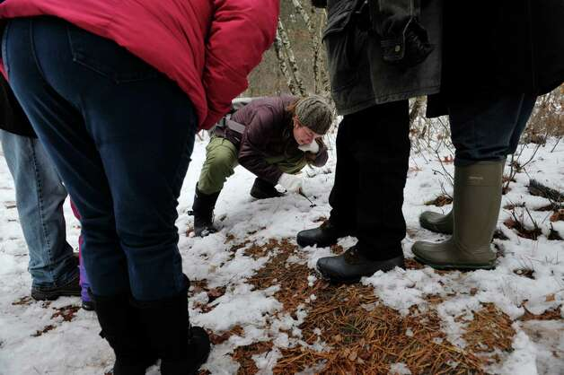 Sara Poggi, center, an environmental educator at the Albany Pine Bush identifies a piece of scat as she leads a group down a trail during the Feisty Fishers program at the Albany Pine Bush on Sunday, Nov. 30, 2014, in Albany, N.Y.  Participants were educated on facts about the fisher before they headed out onto the trails to look for signs of the fisher and other animals that live in the pine bush.  The Pine Bush will have an all ages Almost Full Moon Hike program on Friday evening Dec. 5th and a all ages Paper Making program on Saturday Dec. 6th.  (Paul Buckowski / Times Union) Photo: Paul Buckowski