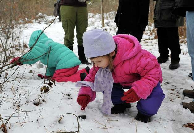 Sisters, Veronica Scaringe, foreground, 6, and Elizabeth, 5, from Colonie use rubber molds of turkey and deer tracks to create tracks in the snow during the Feisty Fishers program at the Albany Pine Bush on Sunday, Nov. 30, 2014, in Albany, N.Y.  Participants were educated on facts about the fisher before they headed out onto the trails to look for signs of the fisher and other animals that live in the Pine Bush.  The Pine Bush will have an all ages Almost Full Moon Hike program on Friday evening Dec. 5th and a all ages Paper Making program on Saturday Dec. 6th.  (Paul Buckowski / Times Union) Photo: Paul Buckowski