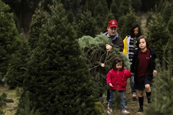 California Christmas tree farmer: '90 percent of what I ...
