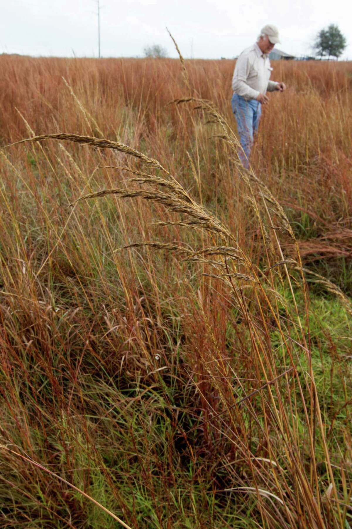 Jim Willis has spent more than a decade restoring overgrazed pastures into native grasslands to make habitats for quail, a rapidly disappearing bird.