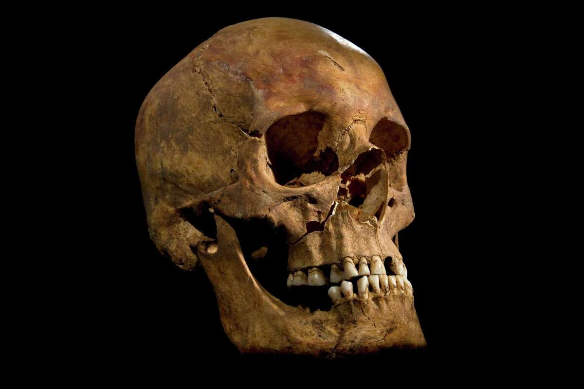 """This skull and other skeletal remains found underneath a car park in Leicester, England, in 2012, have been declared """"beyond reasonable doubt"""" to be the long lost remains of England's King Richard III, missing for over 500 years. According to new research published in the Nature Communications journal, scientists compared the skeleton's DNA to samples from living relatives but found no matches, a discovery that could throw the nobility of some royal descendants into question, including Henry V, Henry VI and the entire Tudor royal dynasty. But Kevin Schurer, pro vice-chancellor of the University of Leicester, said England's current royal family does not claim Richard III as a relative and shouldn't be worried about the legitimacy of their royal line."""