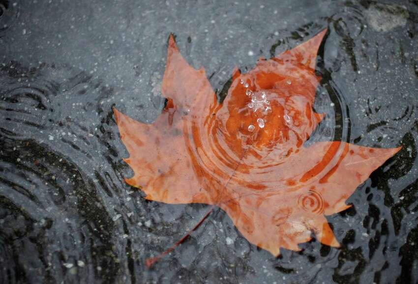 Mother Nature's artistry comes out as a raindrop splashes into a puddle over a leaf in San Francisco on Tuesday.