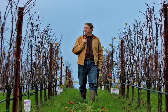 Ted Lemon of Littorai Wines strides through his Sebastopol vineyards. For decades, he has sought to define great Pinot Noir in a uniquely Californian context.