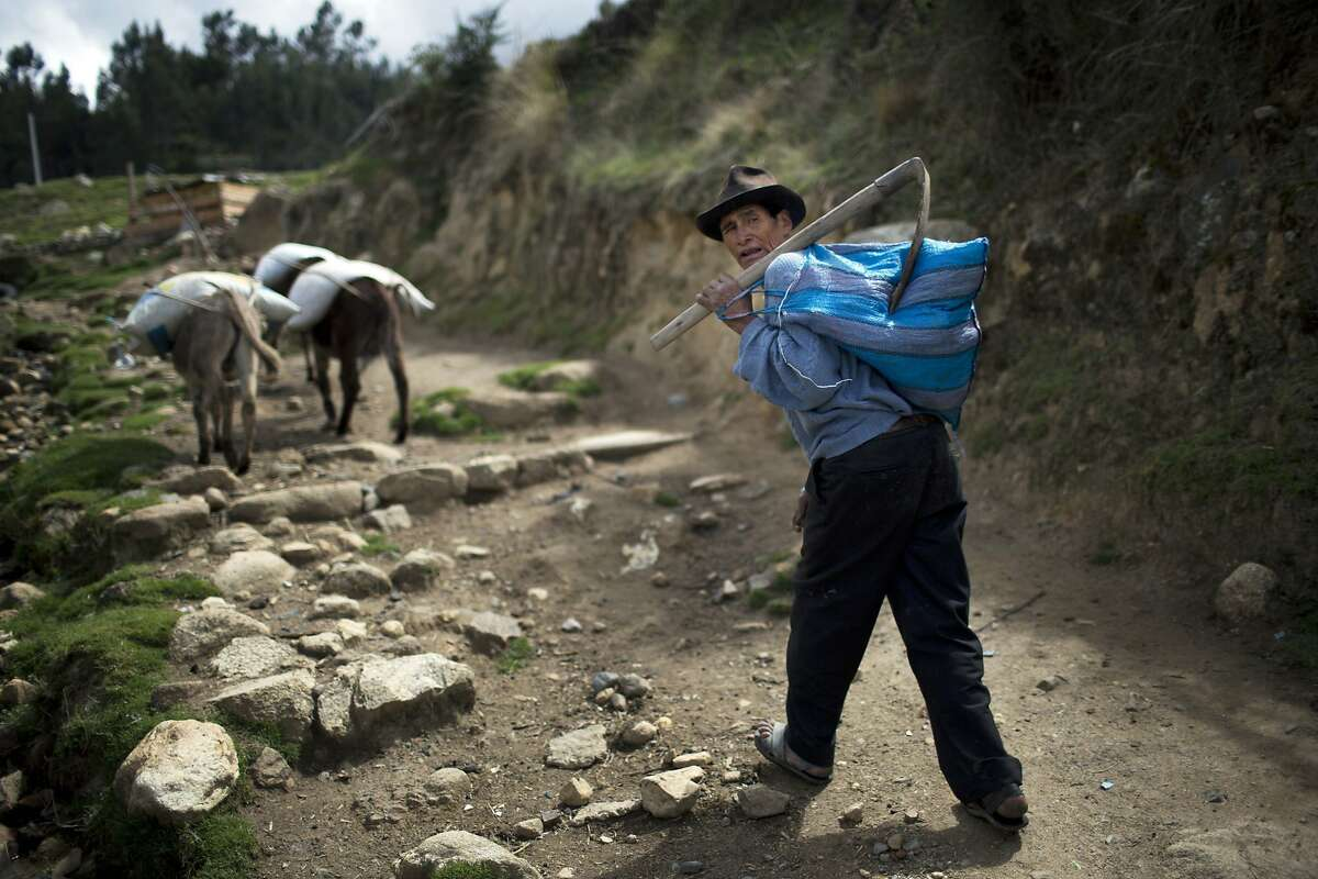 Simon Bolivar, 63, walks towards his plot of land where he grows corn and potatoes in Huaraz, Peru, Wednesday, Dec. 3, 2014. Villagers claim that due to global warming, each year there are more frost out of season and their crops are affected. Peru's glaciers have lost more one-fifth of their mass in just three decades, and the 70 percent Peru's 30 million people who inhabit the country's Pacific coastal desert, depend on glacial runoff for hydropower and to irrigate crops, meaning their electricity and long-term food security could also be in peril. Higher alpine temperatures are killing off plant and animal species in cloud forests and scientists predict Pacific fisheries will suffer. (AP Photo/Rodrigo Abd)