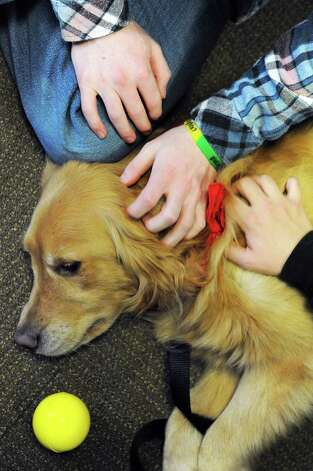 Shelby, a female golden retriever, is pet by students during an end-of-semester stress relief session for students at the College of Saint Rose Thursday, Dec. 4, 2014, in Albany, N.Y. Therapy dogs and make-your-own sundaes are offered to students to help reduce stress while studying for their final exams, which begin Tuesday, Dec. 9.   (Michael P. Farrell/Times Union) Photo: Michael P. Farrell / 00029731A