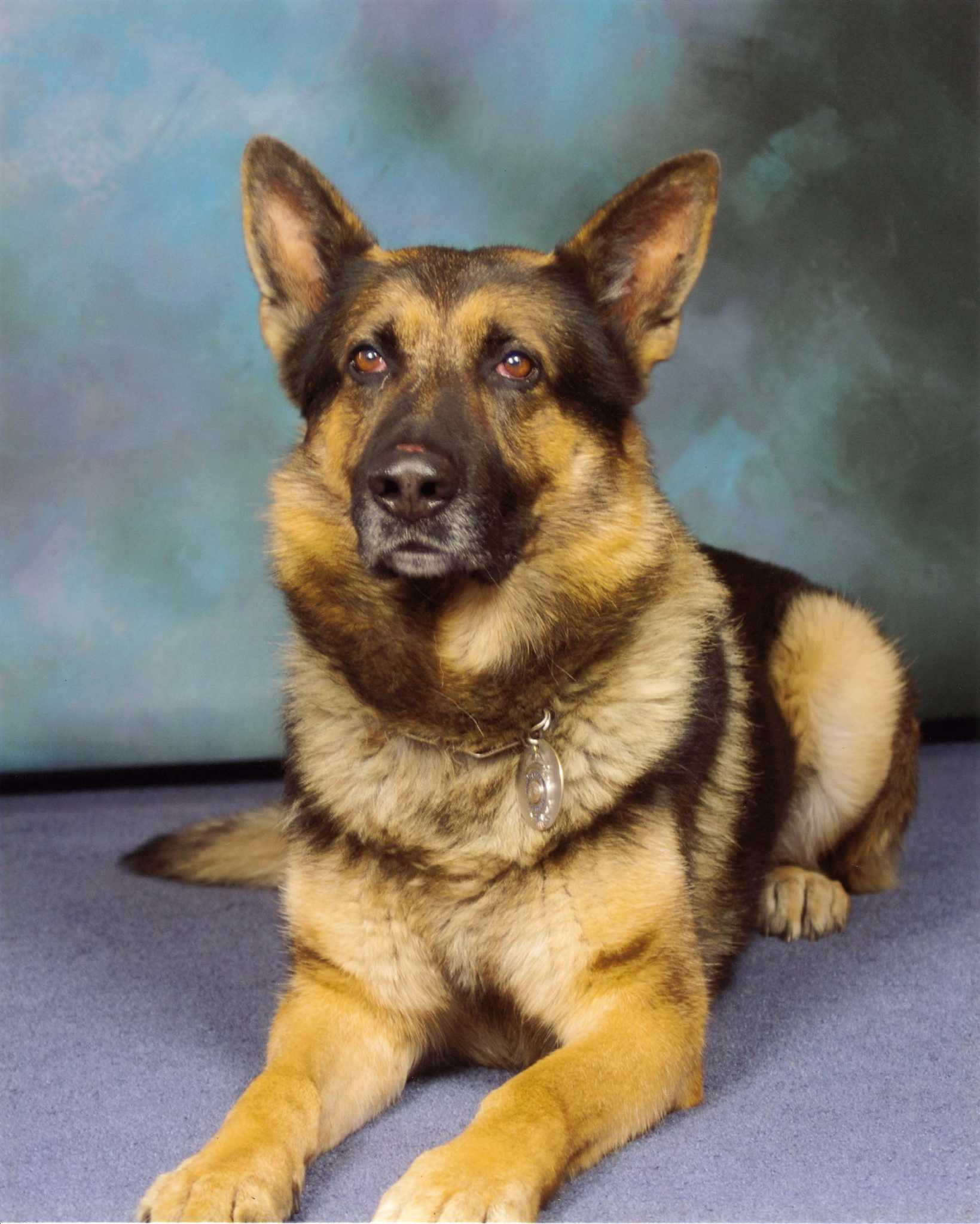 Discussion on this topic: How to Buy a Retired Police Dog, how-to-buy-a-retired-police-dog/