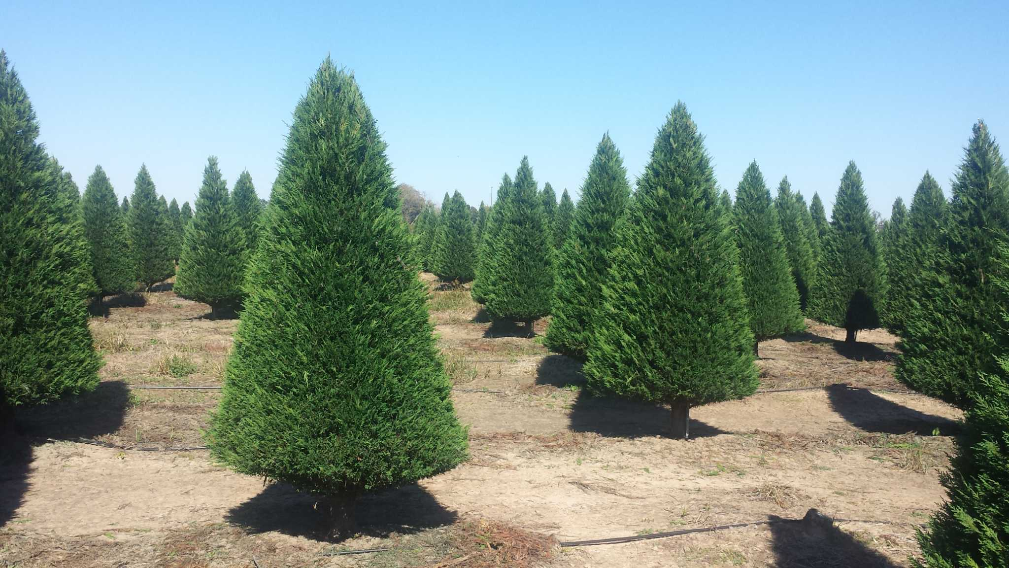 Make Holiday Memories At A Christmas-tree Farm