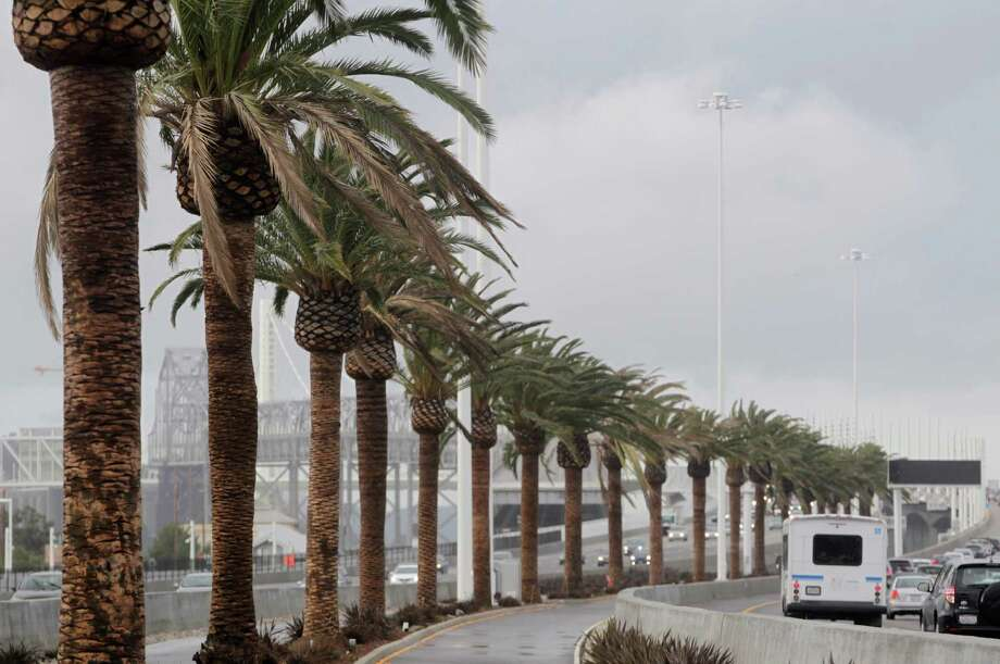 The Canary Island date palms along the Bay Bridge were chosen for their ability to withstand salt air, fog and wind. Photo: Paul Chinn / The Chronicle / ONLINE_YES