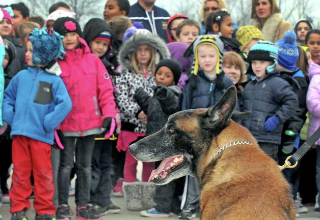 K9 dog Jeter, a 9 year old Belgian Malinois, meets the students at Harmony Hill Elementary School during a demonstration and unveiling of the City of Cohoes new 2015 Ford Explorer K9 Unit on Friday Dec. 5, 2014 in Cohoes, N.Y.  K9 Officer Sean Mckown, a 10+ year veteran on the force and his K9 dog Jeter who has served along side Mckown for 8 years. Officer Mckown has a flawless record and has earned a very favorable reputation among other K9 handlers in the area.  K9 dog Jeter is a 9 year old Belgian Malinois who is trained and certified in narcotics detection which includes marijuana, hash, heroin, crack cocaine, cocaine and methamphetamine. Jeter is also patrol certified in criminal apprehension, tracking and evidence/article recovery. Besides being superior in performance and behavior, Jeter is also a big hit in the community and is the main attraction at community events such as National Night Out and the Safe Summer Festival or can also be seen at local schools and playgrounds. (Michael P. Farrell/Times Union) Photo: Michael P. Farrell / 00029762A