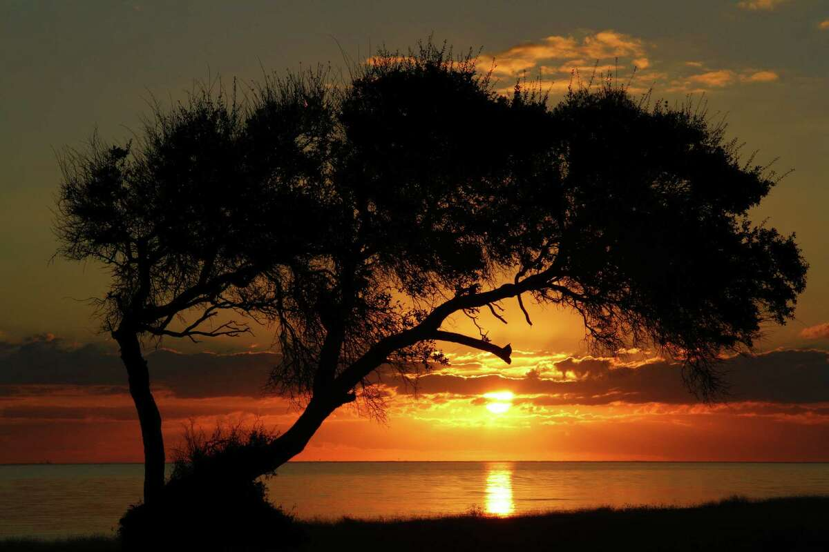 A wind-bent live oak on the Powderhorn Ranch frames a sunrise over Matagorda Bay. Houston Chronicle photo by Shannon Tompkins