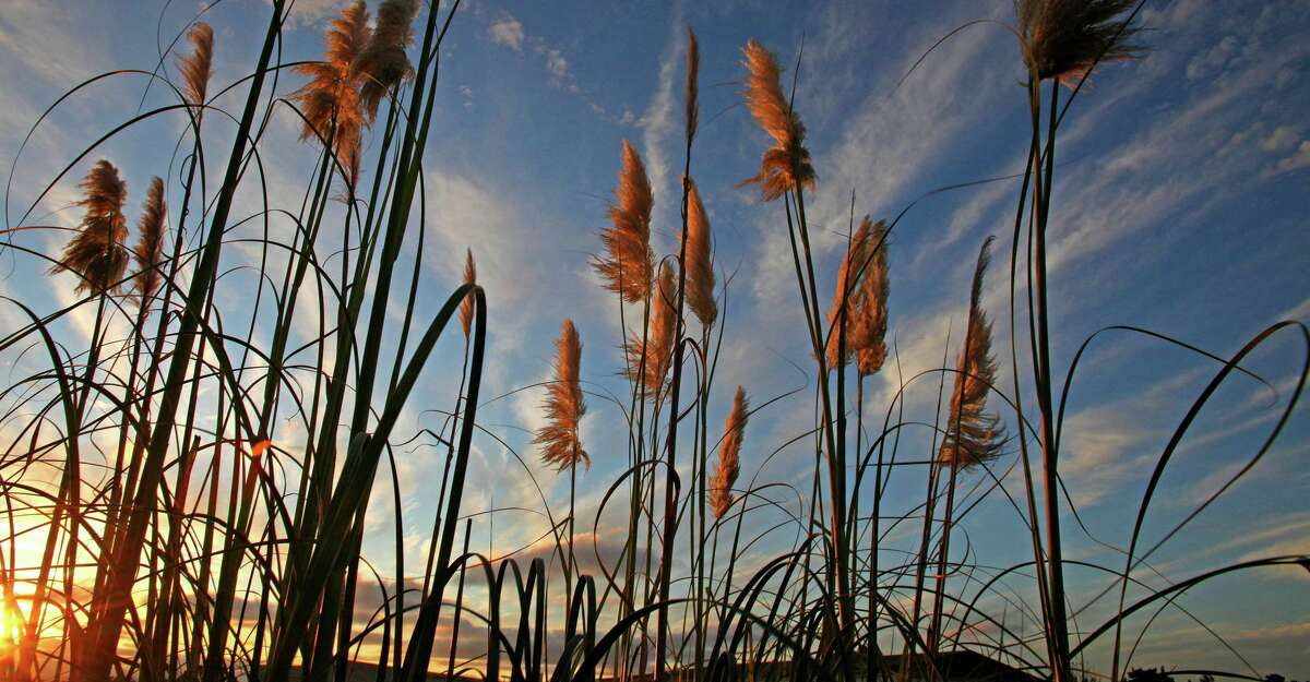 Marshland at Mare Island in Vallejo.