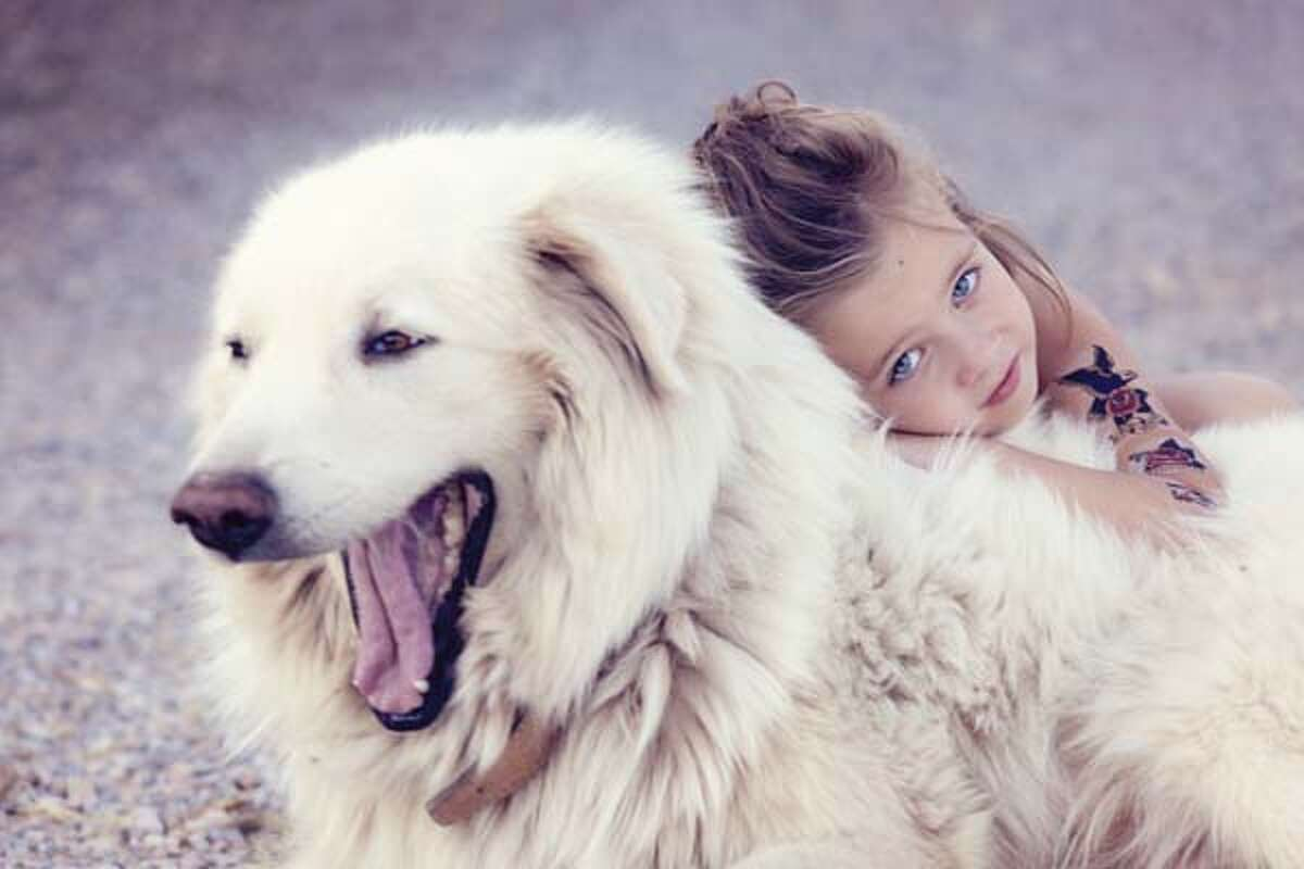 Great Pyrenees Originally used as a guardian of sheep, the Great Pyrenees has a natural instinct to protect. They're independent thinkers and need daily exercise. Their thick, weather resistant coat needs brushing once a week.
