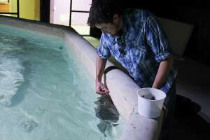 The San Antonio Aquarium will showcase a variety of marine animals, reptiles and birds during its soft opening Dec. 12, 2014,  for annual pass holders.