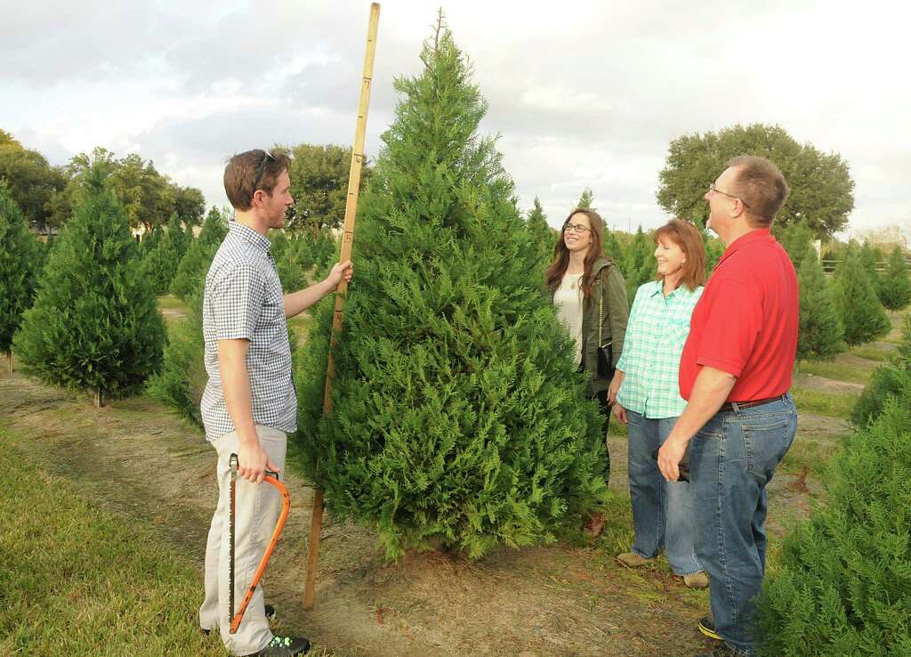 Farms offer option in hunt for Christmas trees - Houston Chronicle