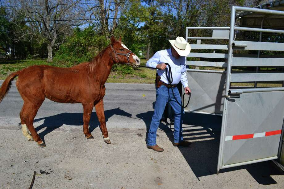 Beaumont Animal Control seized a horse from the 1900 block of Sutherland after receiving a tip that the animal was malnourished. The horse had been left tied to a tree in an empty lot. Photo provided by Mathew Fortenberry