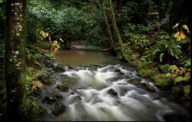 After the storms: The flow of Redwood Creek near Dipsea Trail crossing at Muir Woods National Monument has been restored.