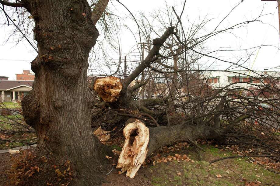 A tree is knocked down due to gusting winds at Violette Apartments, Thursday, Dec. 11, 2014, in Walla Walla, Wash. The National Weather Service is warning of high winds Thursday evening in Western Washington that will be strong enough to topple large trees, causing widespread power outages. Photo: Michael Lopez, AP / Walla Walla Union-Bulletin