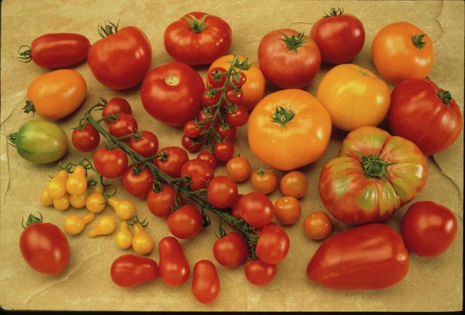 Sow tomatoes soon to have transplants on hand for the spring garden. / handout slide