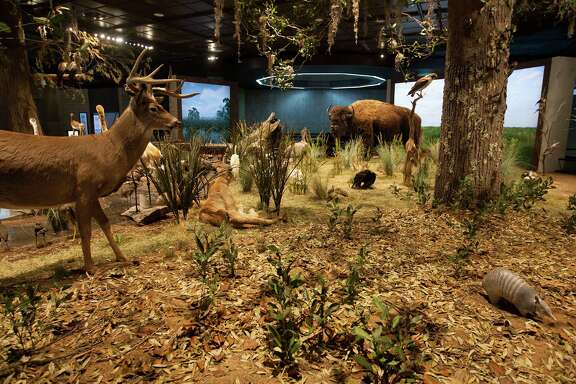 The new Texas Wildlife Farish Hall at the Houston Museum of Natural Science features more than 275 species from the past and present and interactive displays for visitors to learn about the animals. (Johnny Hanson /Houston Chronicle)