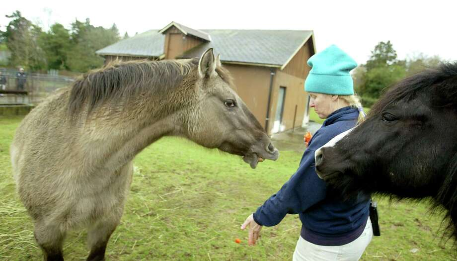 Woodland Park Zoo pony rides ended in 2006, when the ponies got too old. Photo: Scott Eklund, P-I File / Seattle Post-Intelligencer