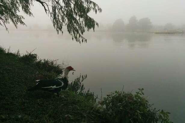 Fog over Woodlawn Lake on Saturday, Dec. 13.
