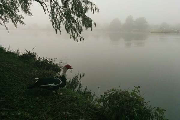Fog over Woodlawn Lake on Saturday, Dec. 13.