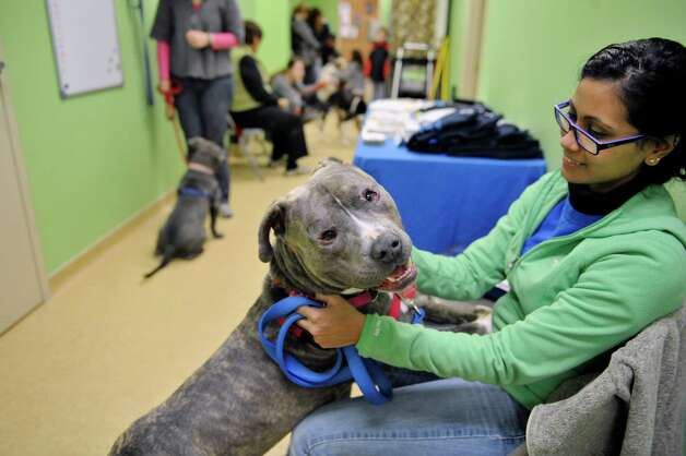 Rimi Dey, a volunteer with the Mohawk Hudson Humane Society, plays with Chandler, a three-year-old Terrier Put Bull mix, at Pet Spas and Suites Pictures with Santa fundraising event on Sunday, Dec. 14, 2014, in Colonie, N.Y.  Chandler is a very gentile dog, Dey said of her.  All money raised from the event goes to help rescued animals.  The Mohawk Hudson Humane Society held an adoption clinic at the event.  The Pet Spas and Suites also opens the first Sunday of every month to hold an adoption clinic.  The next photo event will be March 1, 2015, for Pictures with the Easter Bunny.  (Paul Buckowski / Times Union) Photo: Paul Buckowski / 00029851A