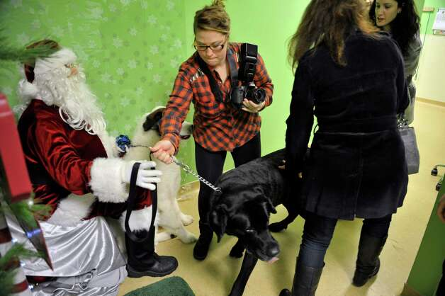 Cody Wasial, with Cody's Cozy Pals, tries to get Romo, a Lab Mastiff mix to sit next to Santa for a photo at Pet Spas and Suites Pictures with Santa fundraising event on Sunday, Dec. 14, 2014, in Colonie, N.Y.  All money raised from the event goes to help rescued animals.  The Mohawk Hudson Humane Society also held an adoption clinic at the event.  The Pet Spas and Suites also opens the first Sunday of every month to hold an adoption clinic.  The next photo event will be March 1, 2015, for Pictures with the Easter Bunny.  (Paul Buckowski / Times Union) Photo: Paul Buckowski / 00029851A