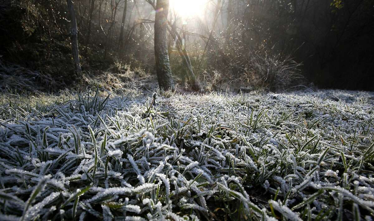 The sun rays break through the mist, illuminating the frost-covered grass on Vodno Mountain, just above Skopje, Macedonia, on Sunday, Dec. 14, 2014. Weather forecasts predict ongoing sunny weather on the mountains with mild temperatures and fog with freezing temperature in the lowlands and valleys. (AP Photo/Boris Grdanoski)