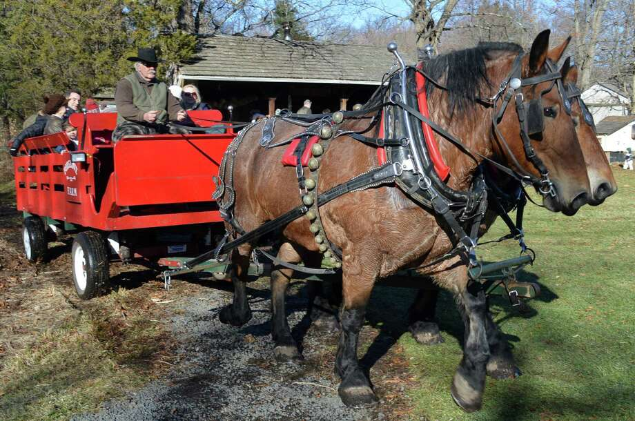 Bonnie and Clyde, two horses from Foxglove Farm in Lyme, took visitors on a ride Saturday at the New Canaan Nature Center's Winter Wonderland. Photo: Jarret Liotta / New Canaan News