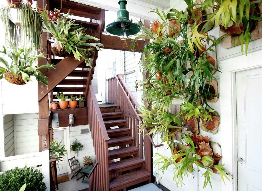 "The staghorn fern wall at Daniel Nolan's home: ""I had this big empty wall that was begging for something. This makes it feel brighter and adds instant lushness."" Photo: Sarah Rice / Special To The Chronicle / ONLINE_YES"