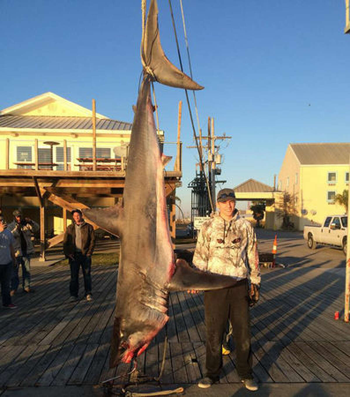 This 580 pound mako was caught on a fishing charter out of Venice, Louisiana. Visitors had come all the way from North Dakota to fish in the Gulf of Mexico.