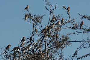A group of birds sit on the branches of a tree at the Oyster Bay Regional Shoreline.