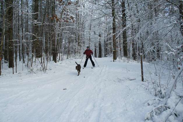 Photo by Gillian Scott. Herb Terns and Rocky the dog ski down a hill at the Wilton Wildlife Preserve in Wilton.