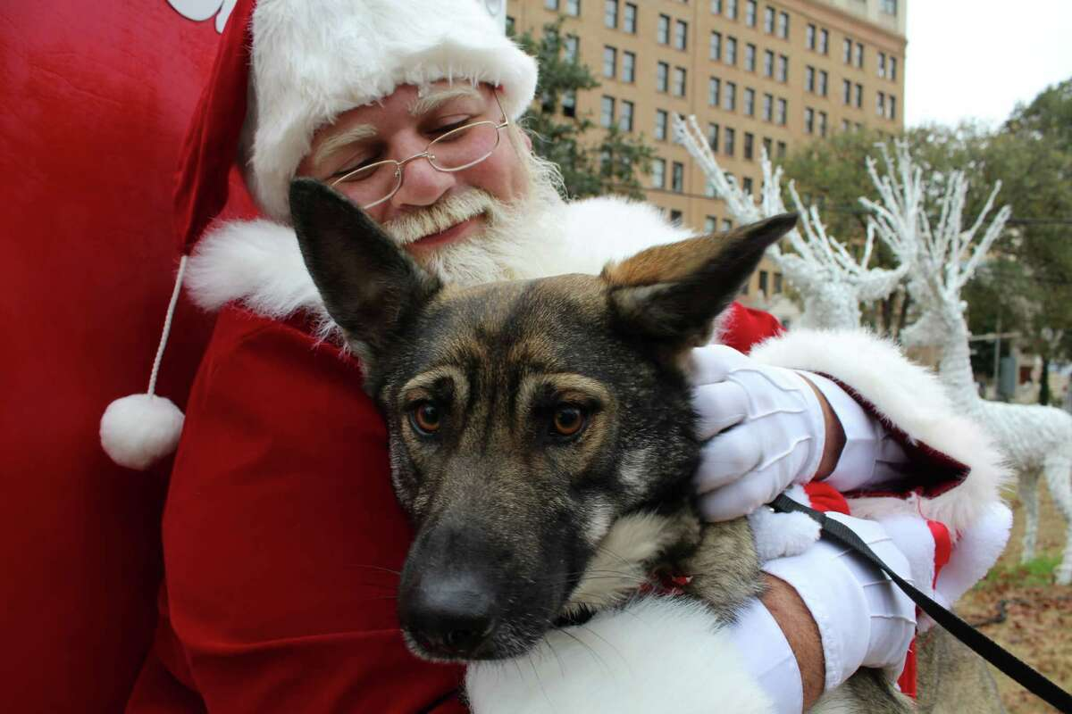 SANTA PICS WITH YOUR POOCH: St. Nick will be down at Pawderosa Ranch (Schertz) 1:00 - 4:00 on Saturday, December 12. Photo ops with you, your pet and the bearded man run $12 and benefit the Animal Defense League. Details.