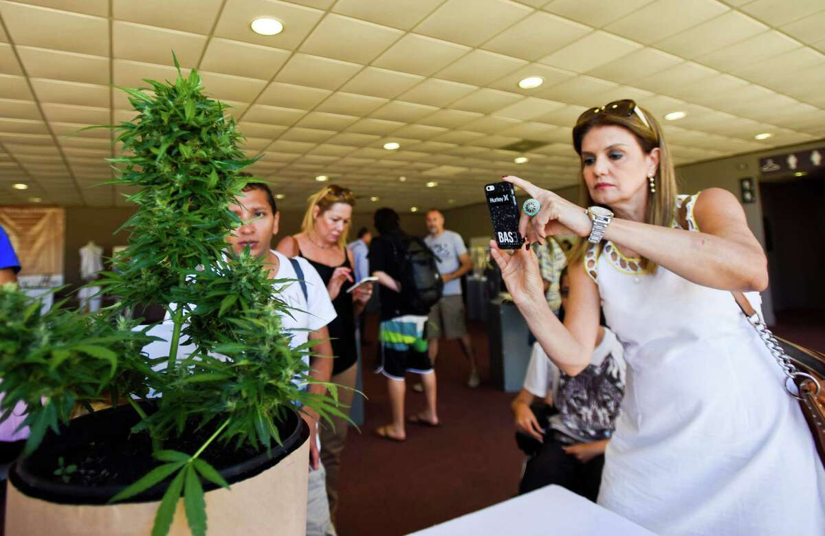 A visitor takes a picture of a marijuana plant during the Expo Cannabis fair in Montevideo, Uruguay, Sunday, Dec. 14, 2014. After state regulation of the production and sale of marijuana, Uruguay had its first cannabis expo with stands selling seeds, marijuana growing technology, conferences and cultivation techniques workshops.Related story: The First