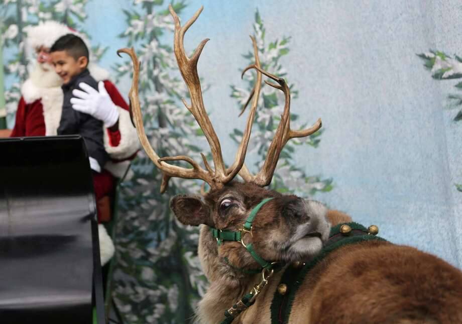 Santa and a reindeer pose for photos. Photo: Mayra Beltran, Houston Chronicle / © 2014 Houston Chronicle