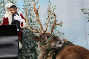 Santa's reindeer cleared for travel in California - Photo